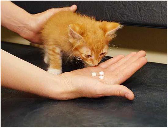 лечение энтерита у кошек