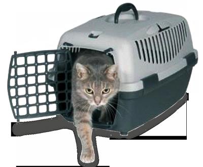 перевозка кошки после стерилизации