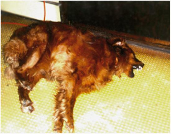 судороги у собак причины и лечение