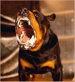 стадии бешенства у собак
