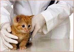 котенок чихает лечение
