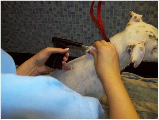 что такое чипирование собак