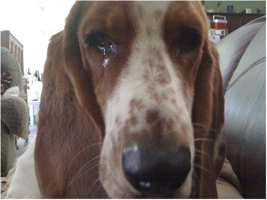 почему у собаки слезятся глаза