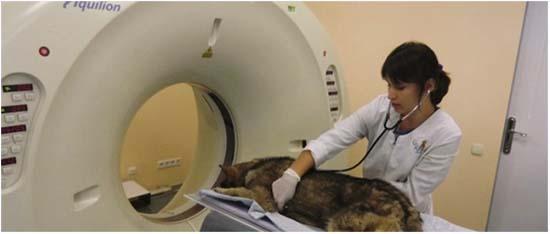 диагностика инсульта у собаки