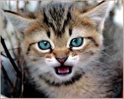 котенок кусается и царапается