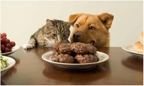 питание при мкб у собак