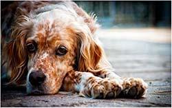 симптомы отравления у собаки