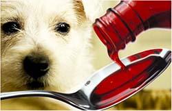 отравление лекарствами у собаки