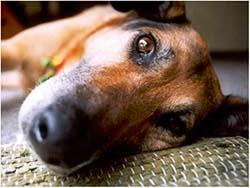лечение отравления к собак