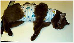 уход за кошкой после операции стерилизации