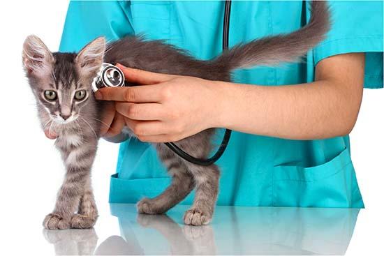 график прививок кошкам