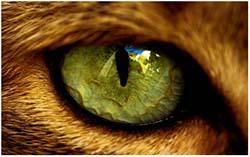 у кошки слезится один глаз
