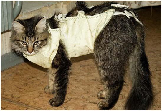 попона после стерилизации кошки