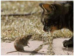 токсоплазмоз кошек