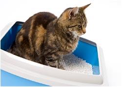 кошка ходит в туалет после стерилизации