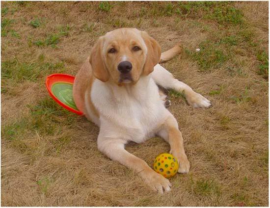 профилактика и лечение артрита у собаки