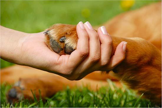 артрит у собаки прогулки профилактика