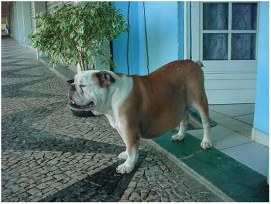 собака после лечения асцита