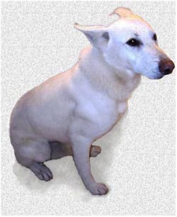 лечение хламидиоза у собаки