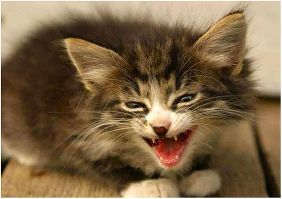 лечение аллергии у кота