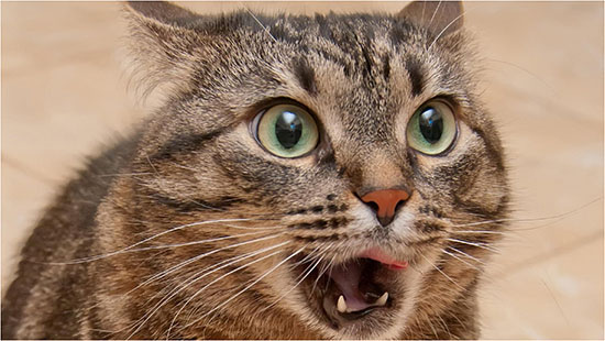 лечение кашля у кошки