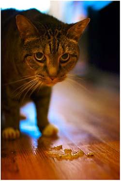 рвота у кошки белой пеной лечение
