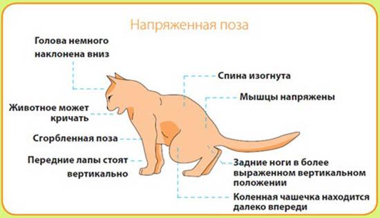 мочекаменная болезнь у кошек симптомы и лечение