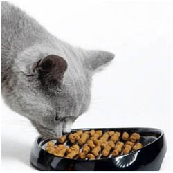 лечение мкб у кошки диета