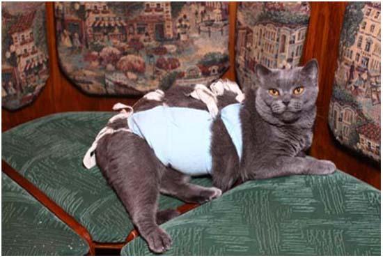 появление шишки у кошки после стерилизации