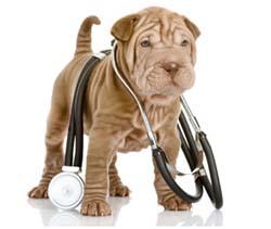 нормальная температура у собаки