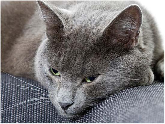 запор у кошки лечение в домашних условиях