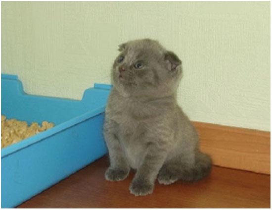 отучить кошку гадить в неположенном месте